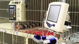 Emergency Care is offered at Veterinary Emergency Clinic of York Region
